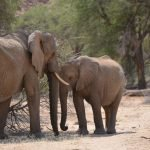 Touching elephants