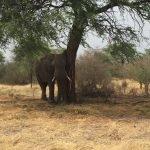Elephant and Etosha