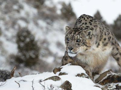 hidden-places-travel-snow-leopard