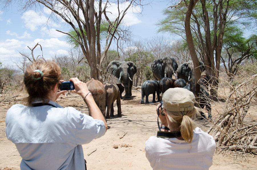 Elephant Encounter in Kenya Safari