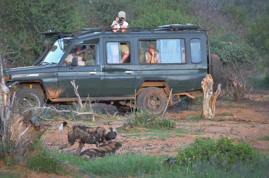 Nature Tripping in Kenya Safari
