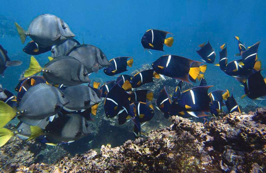 Beautiful Fishes in Galapagos