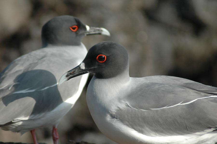 Stunning Beauty of Galapagos Bird