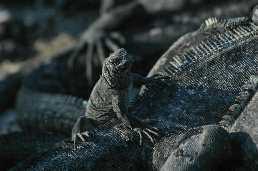 Beauty in Galapagos Wildlife