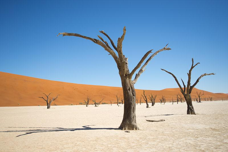Amazing Scenery of Dessert in Namibia Safari