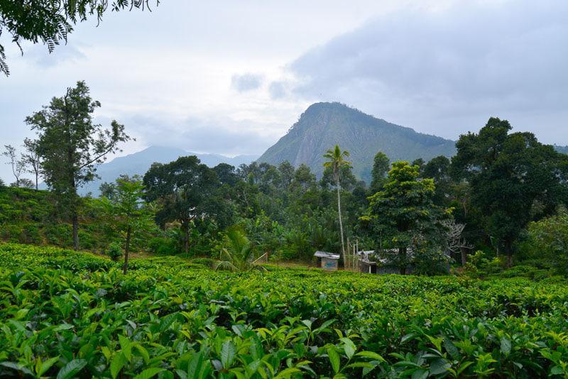 Nature Scenery in Sri Lanka