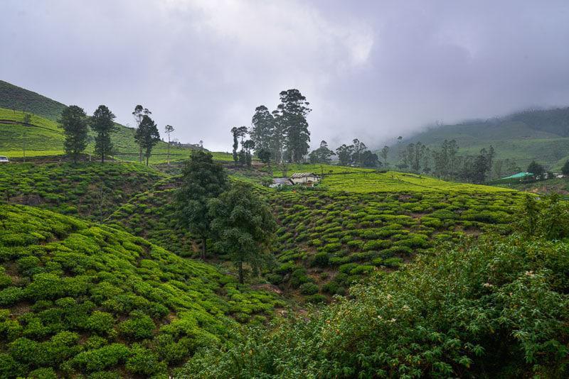 Beautiful Plantation in Sri Lanka
