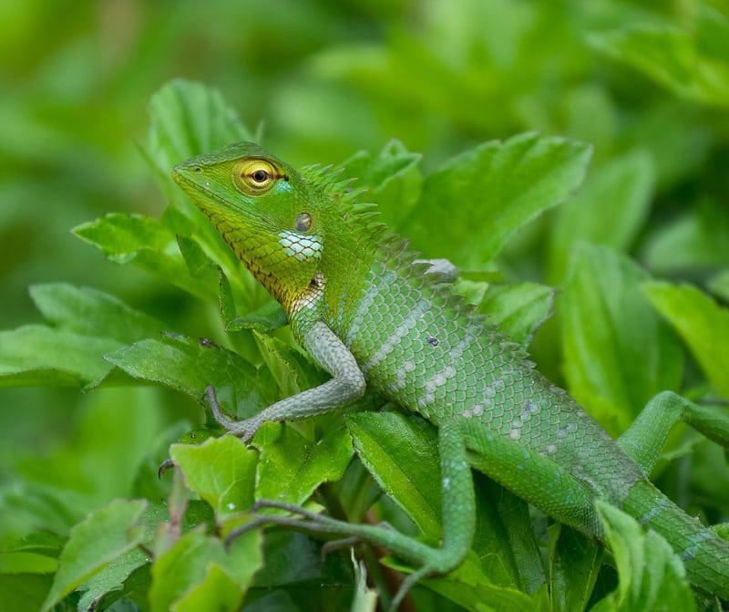 Fascinating Reptiles in Sri Lanka