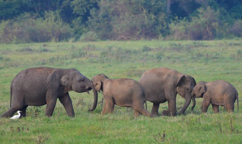 Amazing Photo of Elephants