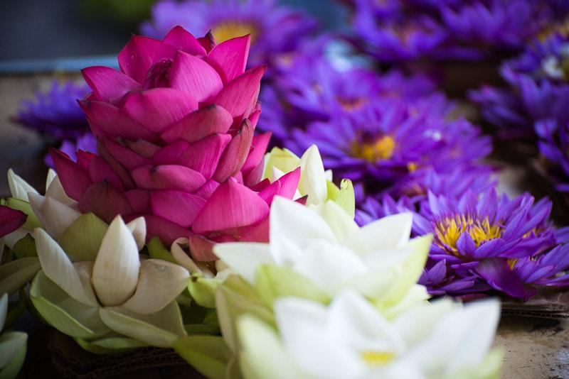 Various Beautiful Flower in Sri Lanka