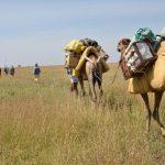 Elephants & Walking Safari