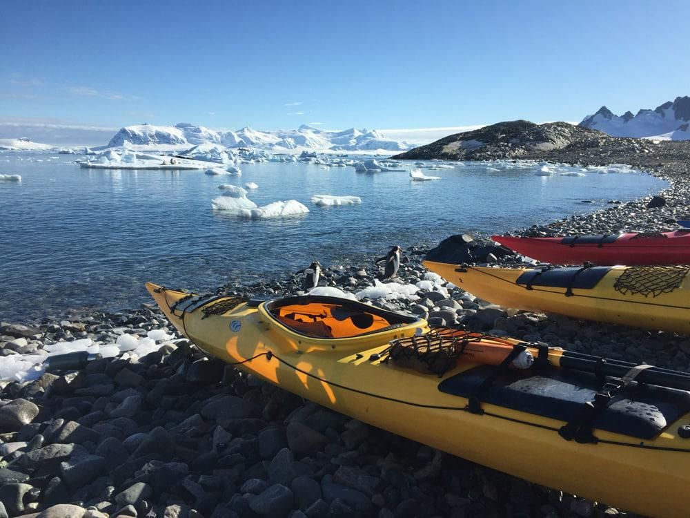 kayaking, more penguins!